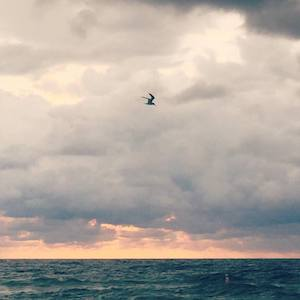 Bird flying over the sea