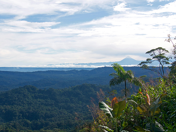 View of Ecuadorian Rainforest and mountain